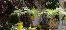 Grand Riad avec jardin et parking     ancienne médina d'Asilah